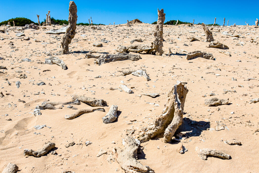 Calcified forest on King Island, Tasmania